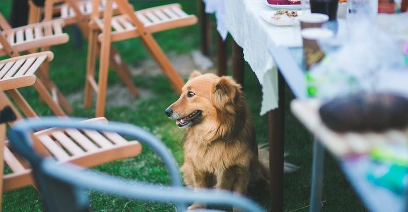 Aliments dangereux pour le chien