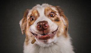Photos hilares de chiens par Christian Vieler