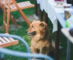 Giftige voedingsmiddelen voor de honden