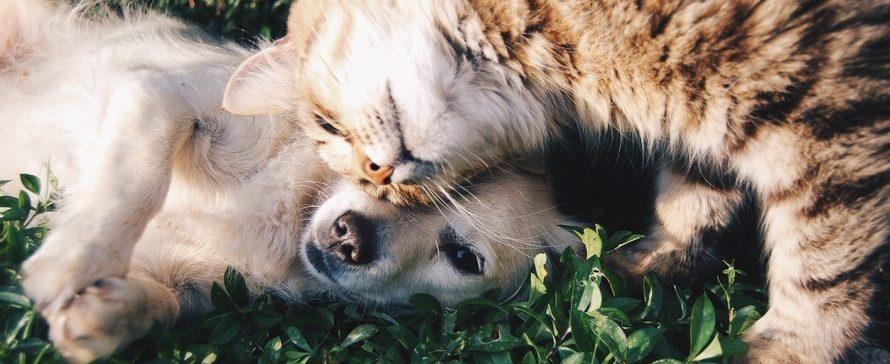 Puppy voorstellen