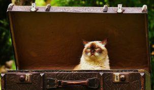 Kat in een kattenmand