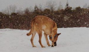 Jouw hond beschermen in winter