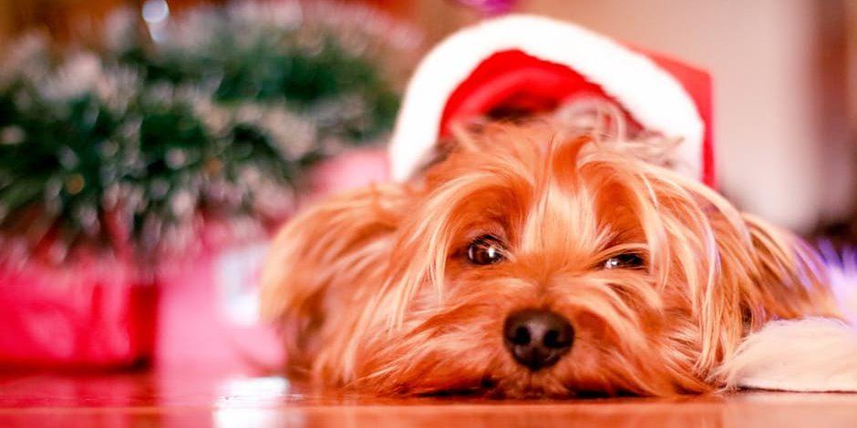 5 bedenkingen wanneer je een huisdier cadeau doet