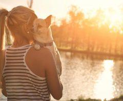 3 goede redenen om zijn hond te verzekeren
