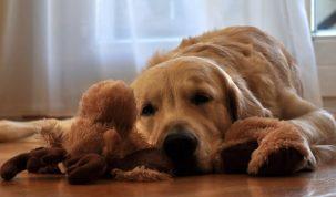 7 tips om jouw hond kalm te houden tijdens vuurwerk
