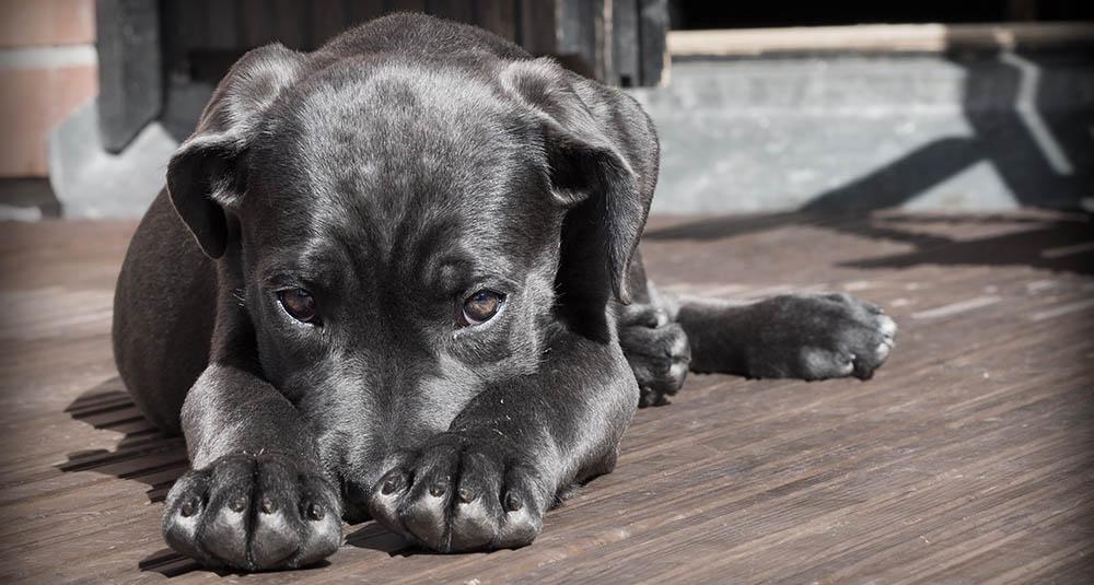 slechte adem hond