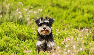 Promener son chien - Happy Best Friends