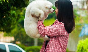 Kiezen voor een hondenverzekering