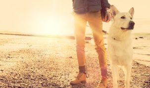 Alles weten hondenverzekering