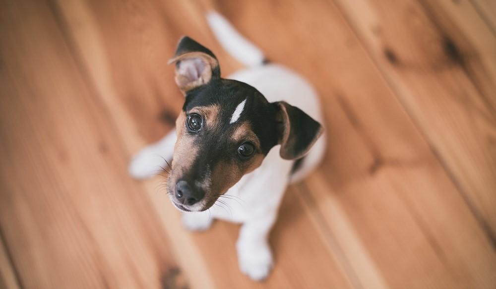 La rentrée de votre chien