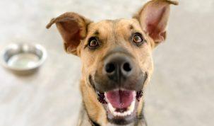 rations ménagères pour chien