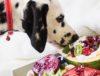 chien mangeant des fruits
