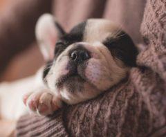 Comparatif d'assurances pour chien