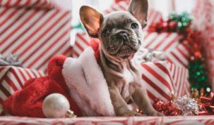Dangers des fêtes pour les chiens