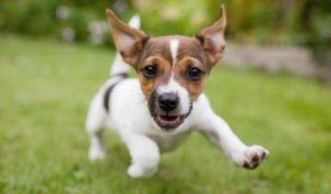 7 tips om voor je hond te zorgen