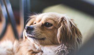 Happy Best Friends stérilisation du chien