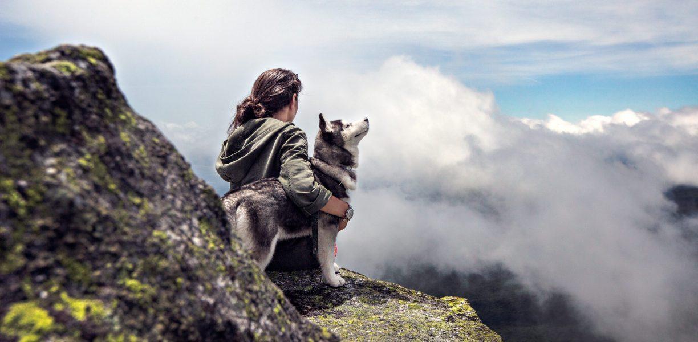 Reizen met jouw hond