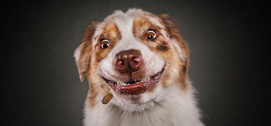Bekend Hilarische fotoreeks van honden door Christian Vieler - Happy Best &RE58