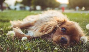 Happy Best Friends hond parasiet de teek