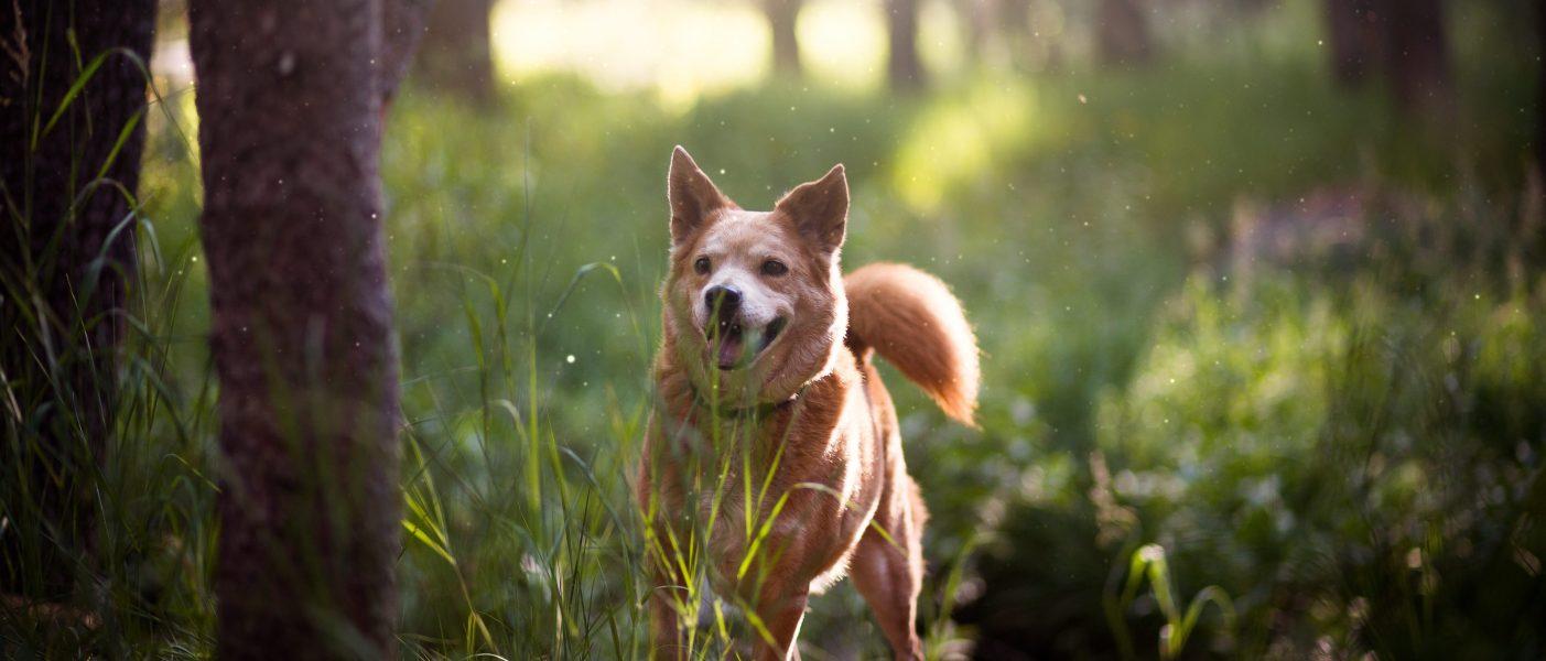 Happy Best Friends Hond Parasiet De vlooien