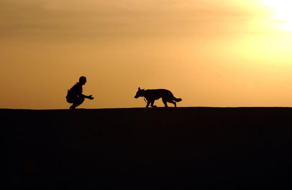 Happy Best Friends Euthanasie chien