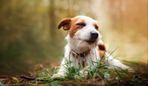Happy Best Friends Futur chien guide