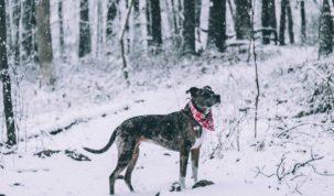 Zijn hond in winter beschermen