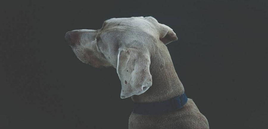 Mijn hond is verloren