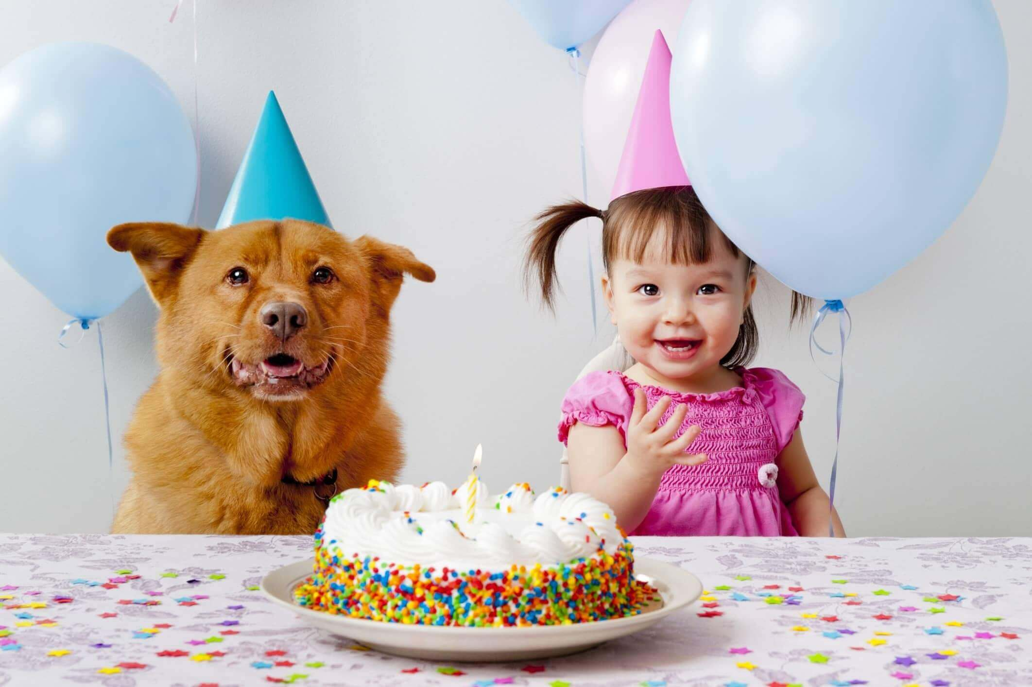 Recette gateau d'anniversaire pour chien
