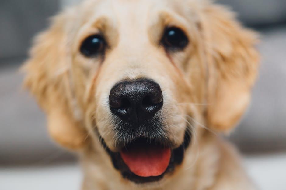 DIY makkelijk feestmaal voor jouw hond