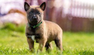 Happy Best Friends - Puppyvoer