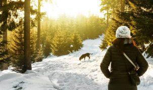 Skivakantie met honden vertrekken