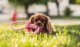 Happy Best Friends-puppy speeltje