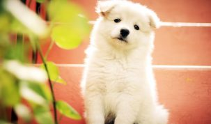Happy Best Friends - puppy ontvangen