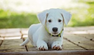 Happy Best Friends - hond basiscomando