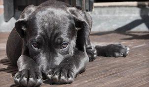 Happy Best Friends - Hond slechte adem