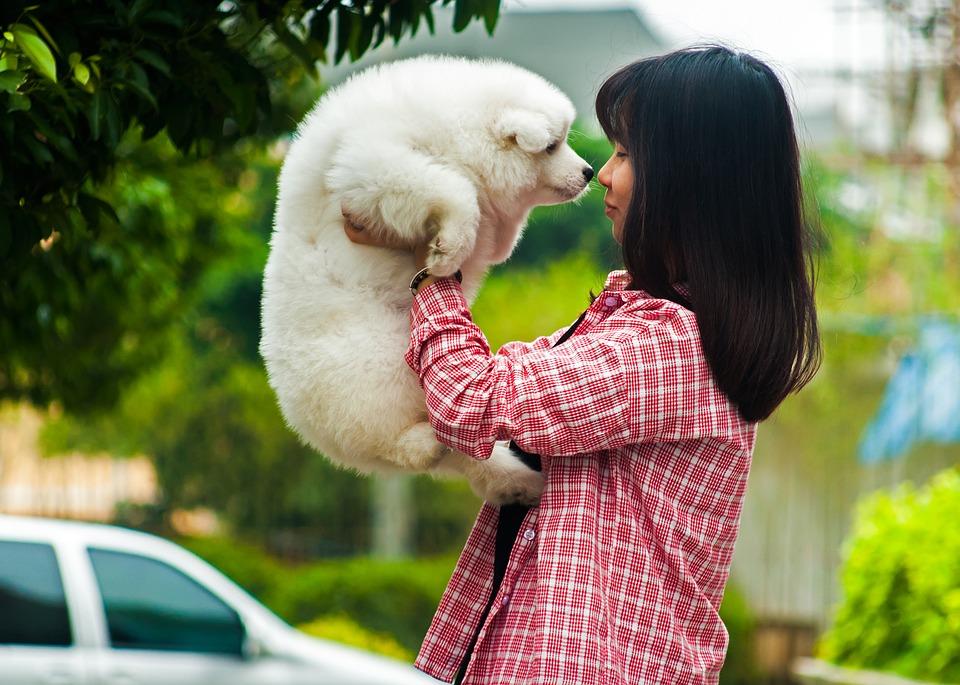 Assurance pour son chien