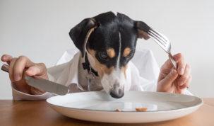 soorten-maaltijden-voor-honden